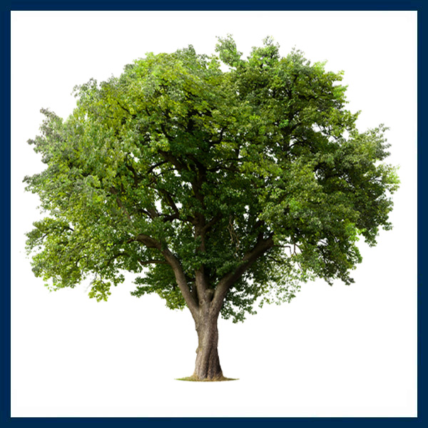 nhpa-tree